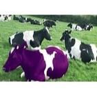 Mercadeo en Red - Vacas Purpuras - Carlos Eduardo Castellanos y Claudia Santos