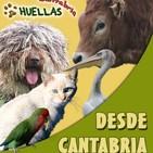 Huellas Cantabria entrevista a Pedro Pozas de proyecto Gran Simio