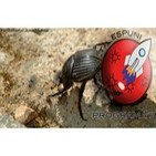 Programa 7 - Los escarabajos, más adictos que los alemanes
