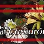 El Ángel de tu Salud - FLOR DE CAMARÓN *