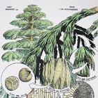 La Brújula de la Ciencia s09e38: Archaeopteris y los bosques húmedos del Carbonífero