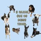 8 razas de perros que no deberías tener