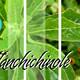Nutribella - TLANCHICHINOLE