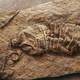 #PORTALIO 167, ¿qué es eso del Antropoceno?