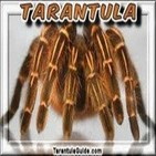 Tarántula: La reina de las arañas