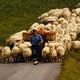 Atlas Etnográfico de Vasconia: Vida pastoril en la montaña