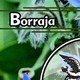 El Ángel de tu Salud - BORRAJA II
