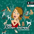 Por el bienestar de tu mascota y del medio ambiente con Life Vegan Pets