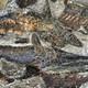 La Brújula de la Ciencia s08e26: Encontrados los fósiles producidos por el impacto que mató a los dinosaurios