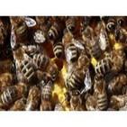 Cap33: Insectos asesinos, hombres insecto y cangrejos