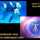 La inteligencia de los delfines/Tipos de meditacion/ Ejercicio meditacion trascendental