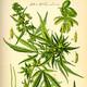 Sobre la Cannabis Medicinal: Entrevista a Luchita