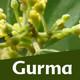 Nutribella - GURMA II