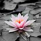 El poder de la vida - Qué es el Mindfulness (desmontando mitos) con Setefilla Pérez