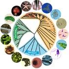 La Brújula de la Ciencia s04e35: Bacterias, arqueas, eucariotas: los tres dominios de la vida