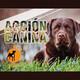 Acción Canina 4