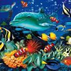 Ecosistemas marinos. Viaje a las profundidades oceánicas con la Dra.Regina Gabilondo. Prog. 157. LFDLC