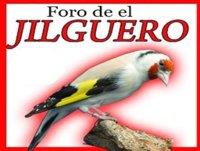 jilguero campero de melilla 2009