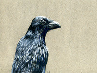 Programa 130 – Los cuervos dominarán el mundo (y está científicamente demostrado)