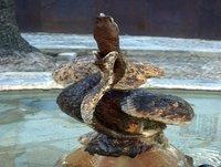 2x5 Investigación Noveno Círculo - La casa de las Serpientes