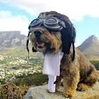 Cuento 'el perro que queria volar'