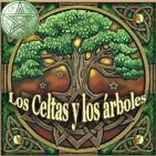 Los Celtas y su relación sagrada con los Árboles
