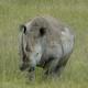 Ankawa Africa 2x08 - Opinión, rinocerontes y voluntariado con animales