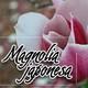Nutribella - MAGNOLIA JAPONESA