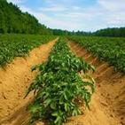 En condiciones de distribuir microorganismos eficientes planta de bioplaguicidas de Mayabeque