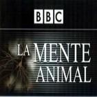 La Mente de los Animales: ¿Son conscientes? ¿Son inteligentes? ¿Tienen emociones?