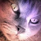 Los Gatos de Ulthar (Lovecraft) | Audiolibro - Audiorelato