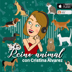 Banco de Alimentos Solidarios Madrid Animalista (BASMA), asociación sin ánimo de lucro