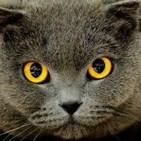 El poder mÁgico de los gatos_ ±increÍbles facultades!
