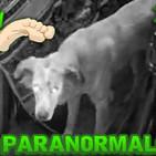 Tak Tak Duken - 153 - Historias Paranormales Argentinas Vol 17