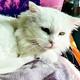 KUNKUSH: gato irakí refugiado que llegó a Noruega// CARMEN RIGALT & URSULA//Egipto antiguo gatuno // ¡Adopta a BLANCA!
