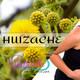 Nutribella - HUIZACHE