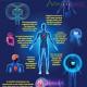 La funciÓn psicolÓgica de nuestros organos