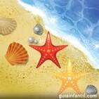 356. Las estrellas de mar.
