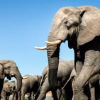 Un elefante se balanceaba (canción)