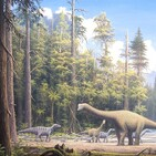 La Brújula de la Ciencia s09e43: Bosques en la época de los dinosaurios: la era de las coníferas