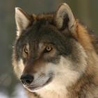 Perpetuum Mobile. Episodio 42. Wolf eyes