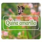 El Angel de tu Salud - QUINA AMARILLA**