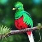 EL RINCÓN DE LA TÍA ROSA: El Quetzal