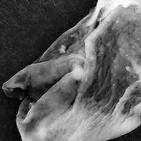 Microorganismos Extraterrestres que controlan al Ser Humano - Congreso en Genovés