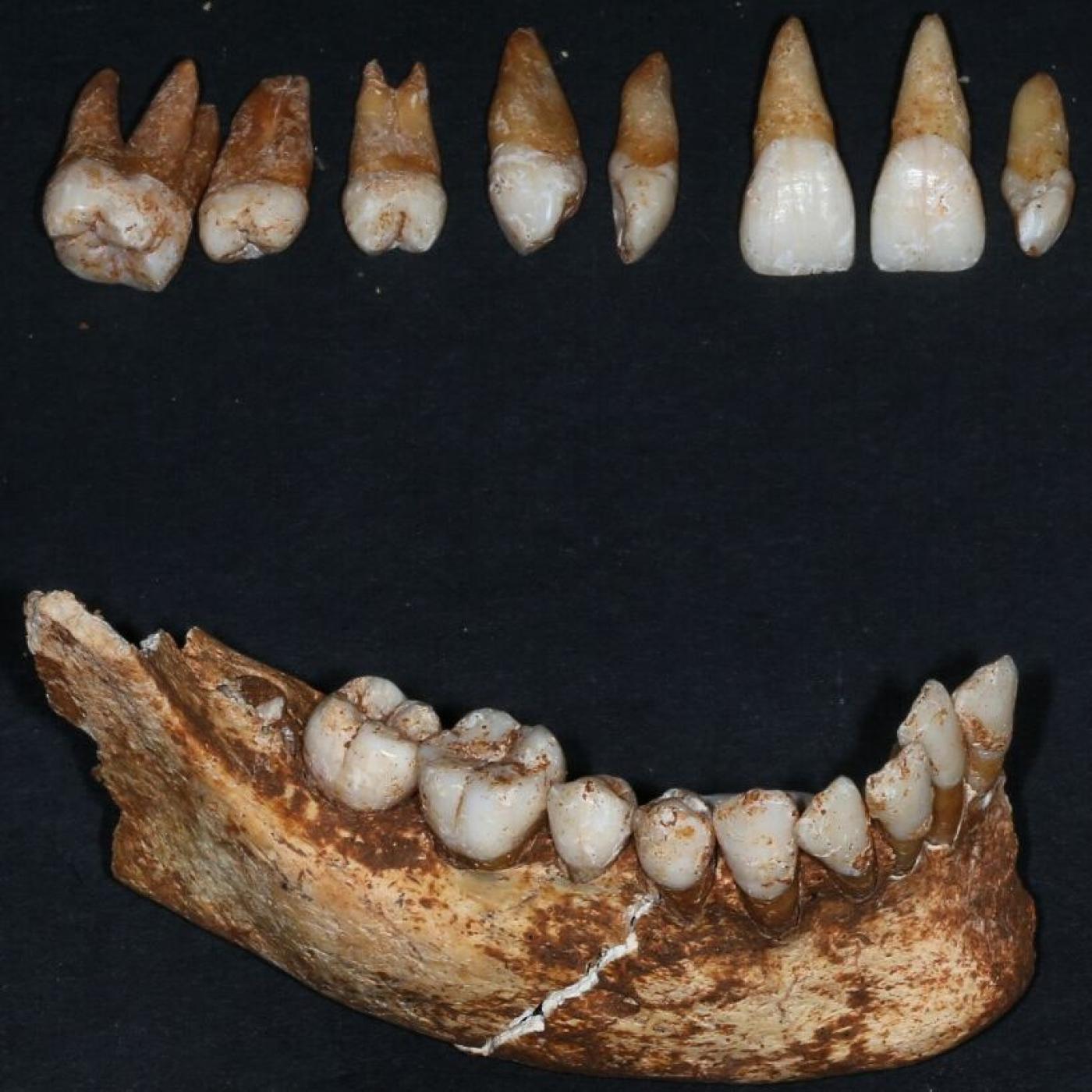 La dentadura de nuestras antepasados