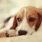 La Epilepsia, también la padecen nuestros canes.