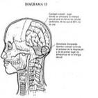 23. Tres posturas de respiración testicular