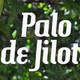 Nutribella - PALO DE JILOTE1