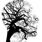 El cerebro humano (47)