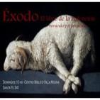 Exodo 2:15-22 - Moisés huye de Egipto - EXOS5